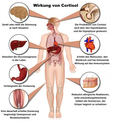 Cortisolspiegel senken. Wirkung von Cortisol