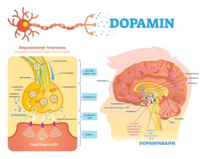 Dopaminpfad Dopaminbahn MAngel Dopamin