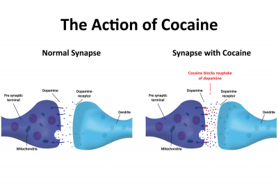 dopaminueberschuss kokain