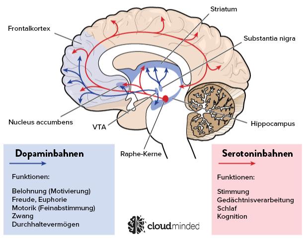 dopamin pfad belohnungszentrum (2)