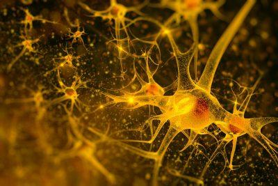 Wirkung Vitamin B12 auf Nervensystem